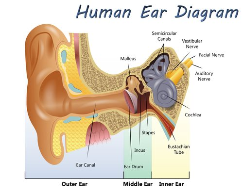 Ear and Hearing Disorders